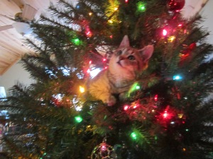 Our kitty Lily. This was her first Christmas Tree :)