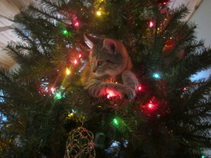 Our Kitty Lily. This was her first Christmas Tree. :) She's such a little ham! :)